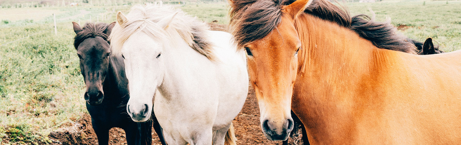 horse-feed-1920x600-1_banner